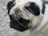 080614088 Trauriger Hund