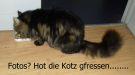 181208001 Katz gfressen1