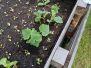 Garmanns - Hochbeet bepflanzt