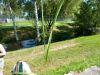 100710011_Ackerquäke, Unkraut mit gedrehtem Blatt